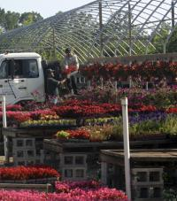 Blooming flowers on tables in planter trays, with a white truck in the background