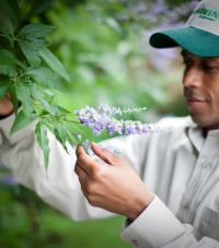 A TruGreen worker looking at a flowering bush